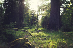 What Are The Environmental Responsibilities Of Business?
