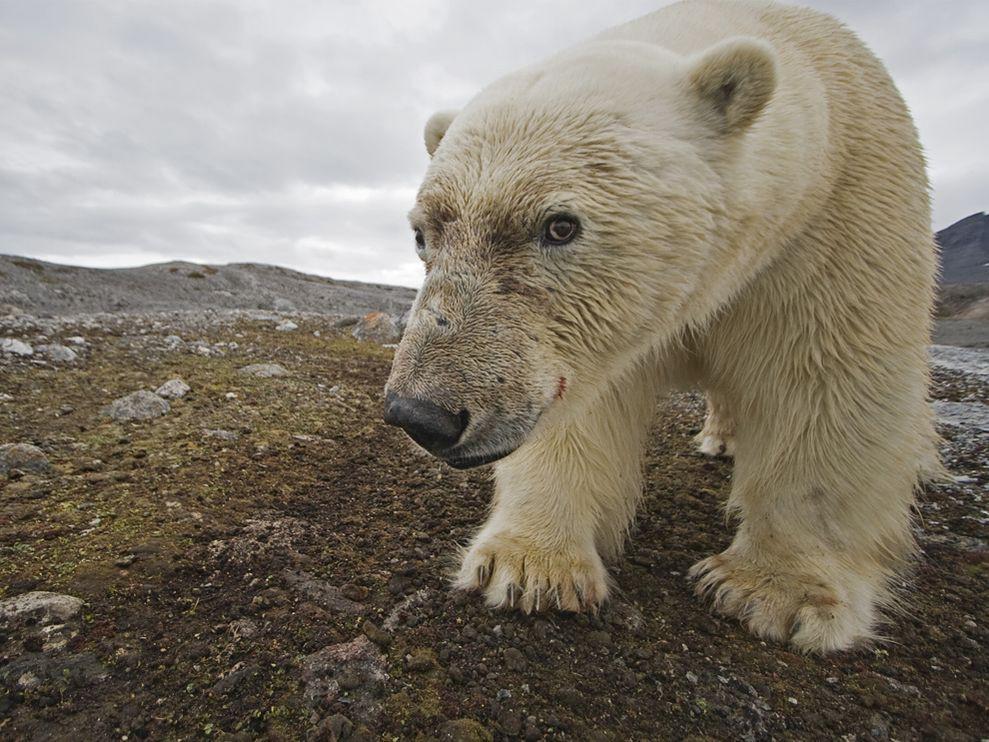 A Crash Course on Climate Change